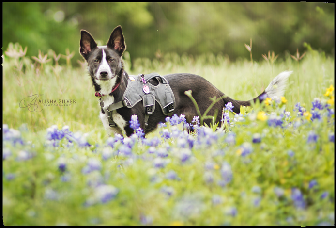 San Antonio Pet Photography