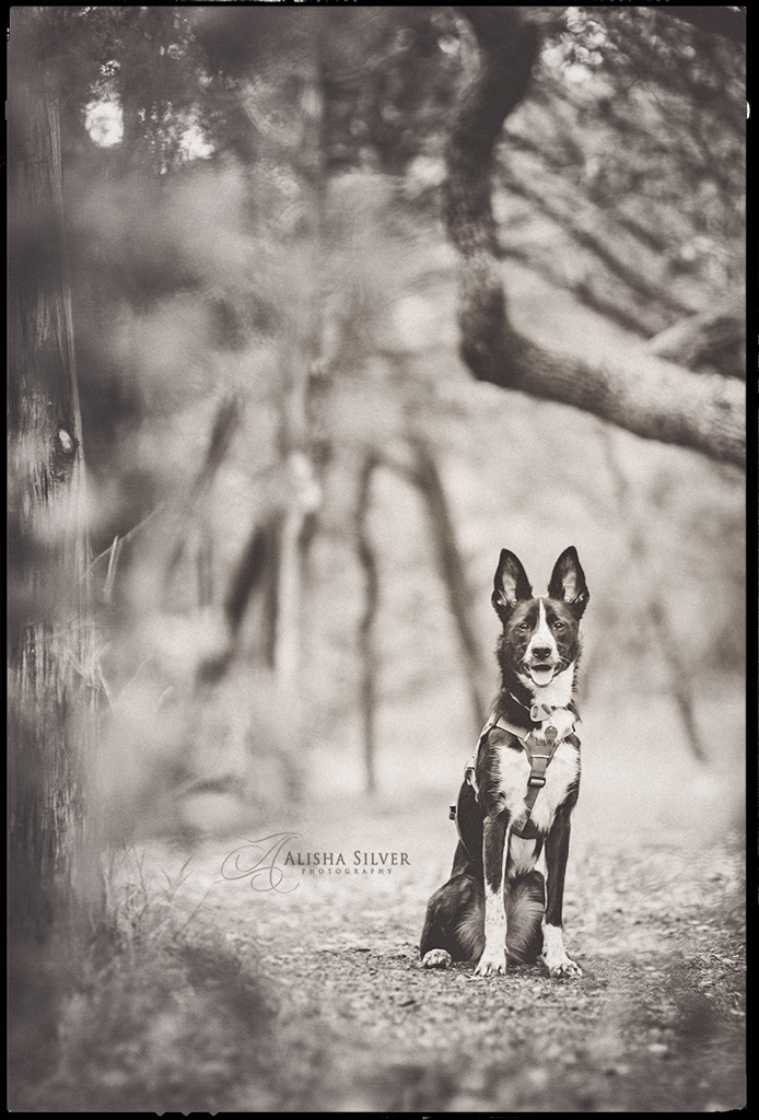 dog-photographer-texas