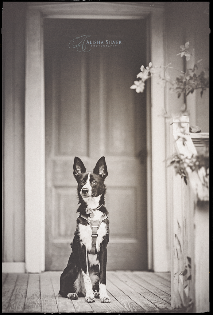 san-antonio-pet-photographer