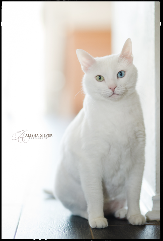 pet-photographer-san-antonio