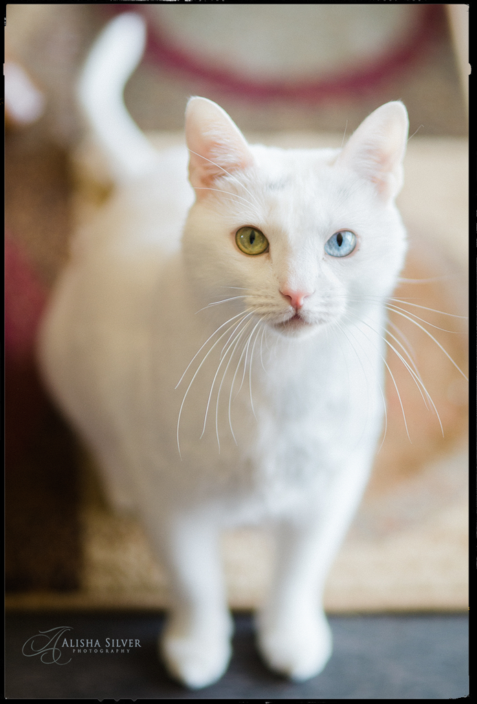 pet-photography-cat